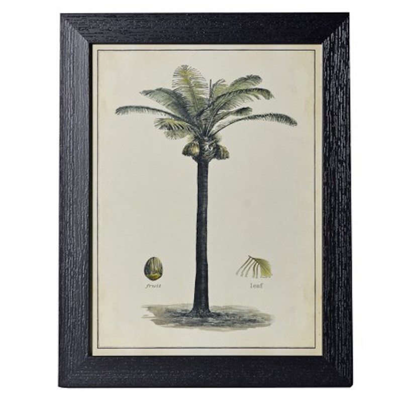 palm tree images vintage print
